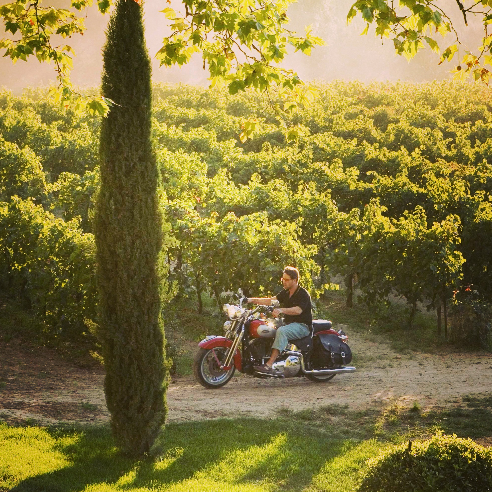 Russell Crowe dans les vignes (A Good Year)